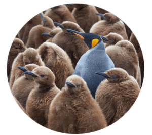 stand out compared to other advisors